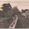 Tasmania: c.1910 - unused card by Valentine (300122) with a